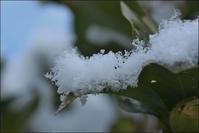 淡雪 - じょんのび
