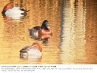 浮間公園 2017.2.25(1) - 鳥撮り遊び
