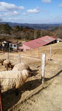 ひつじの公園 山添村めえめえ牧場 → 天理スタミナラーメン  - おでかけごはん
