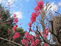 赤、白、ピンク、緑がかった白・・・ - 蜂谷真紀  ふくちう日誌