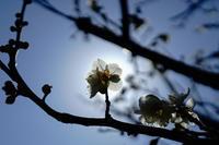 春ですねⅡ - 気ままに写生活