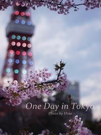 Tokyo Tower Today  今日の東京タワー - Cucina ACCA
