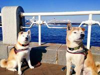 犬に名前を付ける日 - 小鉄と斗和の親子日記
