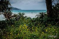 ☆ 海辺の黄色い花 ☆ - Trimming