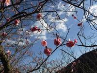 季節を感じる - フラに癒されて。風の吹くまま心地よく