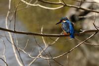 鳥を撮ってみる - miyabine's フォト日記2~身の周りのきれい・可愛い・面白い~