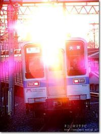 【き】逆光:ぎゃくこう - ネコニ☆マタタビ