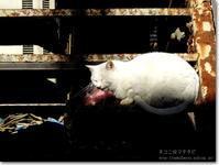 【ね】ネコに出会った:ねこにであった - ネコニ☆マタタビ