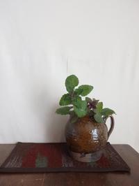 野の花を生ける - 暮らしと植物のブログ