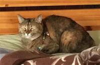 【娘の愛ネコといっしょにいる時間】 - 性能とデザイン いい家大研究