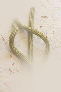 特小ビーズで茎を作ってみました - ビーズ・フェルト刺繍作家PieniSieniのブログ