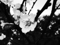 0225大阪城の梅林 - 日々の写真