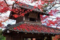 京都の紅葉2016 禅華院の秋 - 花景色-K.W.C. PhotoBlog