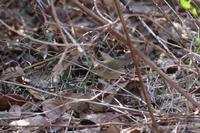 MFの鳥たち - 野山の住認たちⅡ