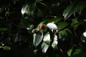 Revealed Spring - 銀塩とデジタルが写す自然と生命