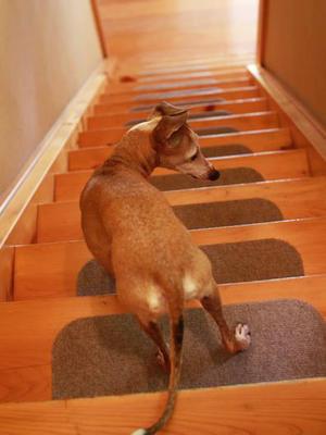 ルビりん、今回の階段チャレンジ。 - イタグレ ルビーの日記  Ruby Tuesday