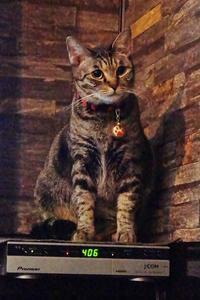 気ままなイタリアンチャーリーの看板猫は少しも気ままではなかった - たんぶーらんの戯言