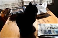 物申す - あずきのばあばの、のんびり日記