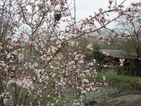 薄桃色の花が見たくて - フランス Bons vivants idees d'aujourd'hui