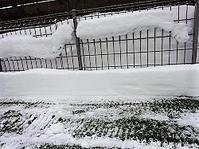 金曜から土曜までの積雪量 - わんわん・パラダイス