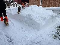 そして日曜日の積雪量 - わんわん・パラダイス