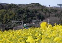 神戸運動公園~菜の花と地下鉄~ - ぶらり休暇