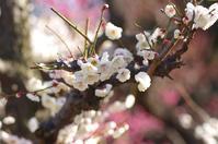 梅の季節 - My ブログ