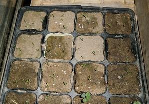 ナスの発芽とジャガイモの植え付け - ブルーベリーの育て方& 栽培 ブルーベリー ノート BlueBerryNote