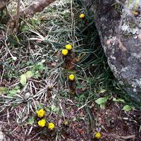 庭に春を見つけました!(^^)! - 自然の中でⅡ