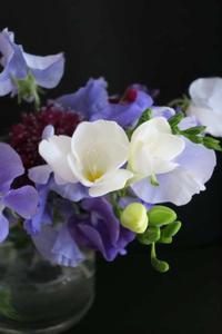 花の開花 - Wanderlust