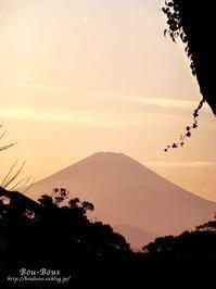 早春の鎌倉&江ノ島 その4 ラスト - ぶうぶうず&まよまよの癒しの日記