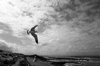 春のような海でカモメが飛んだ日。 - Yoshi-A の写真の楽しみ
