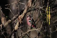 よく見ると梅も満開なんだ! - Weblog : ちー3歩