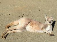2月27日(月) 再起動 - ほのぼの動物写真日記