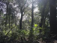 明治神宮の森 - 庭日和