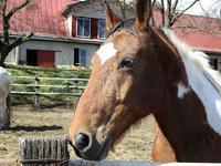 牧場の馬 - つれづれ日記