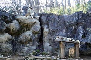 「コボ」と「ミミ」のペアリング - 動物園放浪記