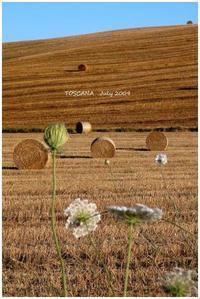 TOSCANA ① July 2009 - Chaton の ひとりごと