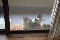 最近の猫事情12 - 鳥会えず猫生活
