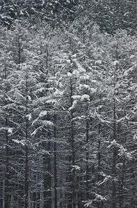 大雪の朝 - 空ヤ畑ノコトバカリ