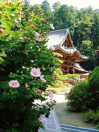 蔵出し写真・奈良岡寺の夏 - 風流人(古風人)のカメラ日記