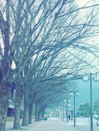 2月も終わり - Blue Planet Cafe  青い地球を散歩する