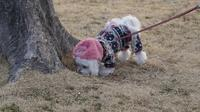 日曜日のお散歩と♪ - いちご&ニコの photo 日記♪