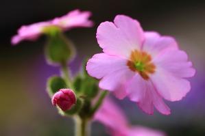 庭の花2/27 - つれづれに
