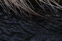 川のメロディ - フォトな日々