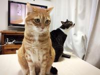 医者運・・・口内炎が治らない - いぬ猫フェレット&人間