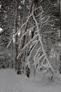 猪苗代湖 湖畔の雪景色 その後半 - 日本あちこち撮り歩記