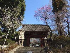 深大寺 - つれづれ