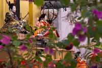 バナナやブーゲンビリアに囲まれた南国ひな祭り - デジタルフォトライフ