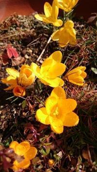 花が咲く - 気づいたことを残したいだけ。